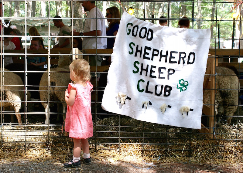 good_shepard_sheep_club